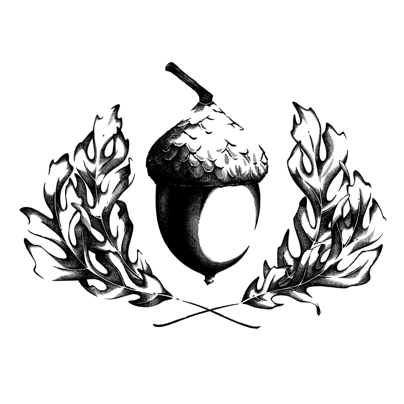 Illustration-Toronto-Julie-Kraulis-Acorn-Logo