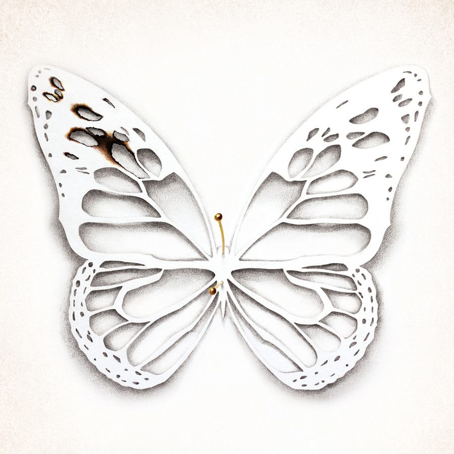 book cover butterfly